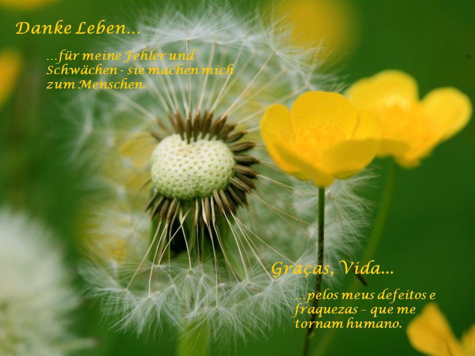 Danke Leben… …für den Weitblick und den geistig weiten Horizont bis hin zur Erkenntnis. Graças, Vida... …por uma visão e por um amplo horizonte espiri
