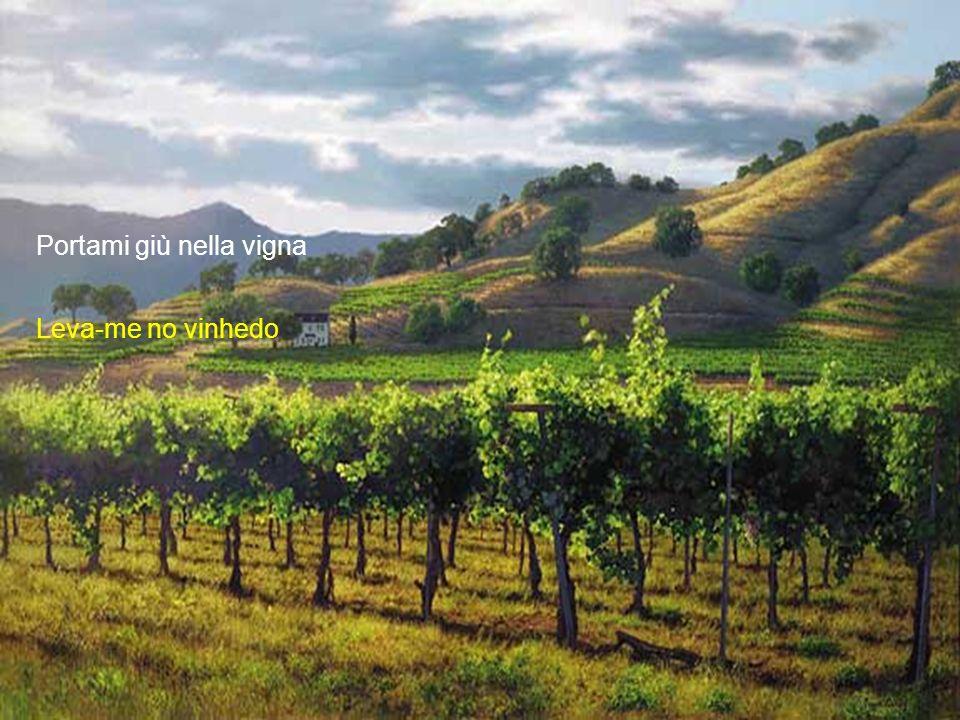 sob as fileiras da uva por cada bago um beijo de amor.
