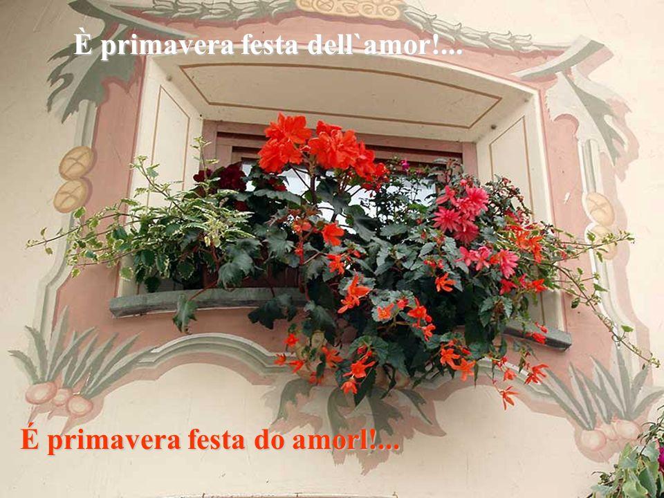 Aprite le finestre al nuovo sole È primavera, festa dell`amor... Abram as janelas ao novo sol É primaveral, festa do amor...