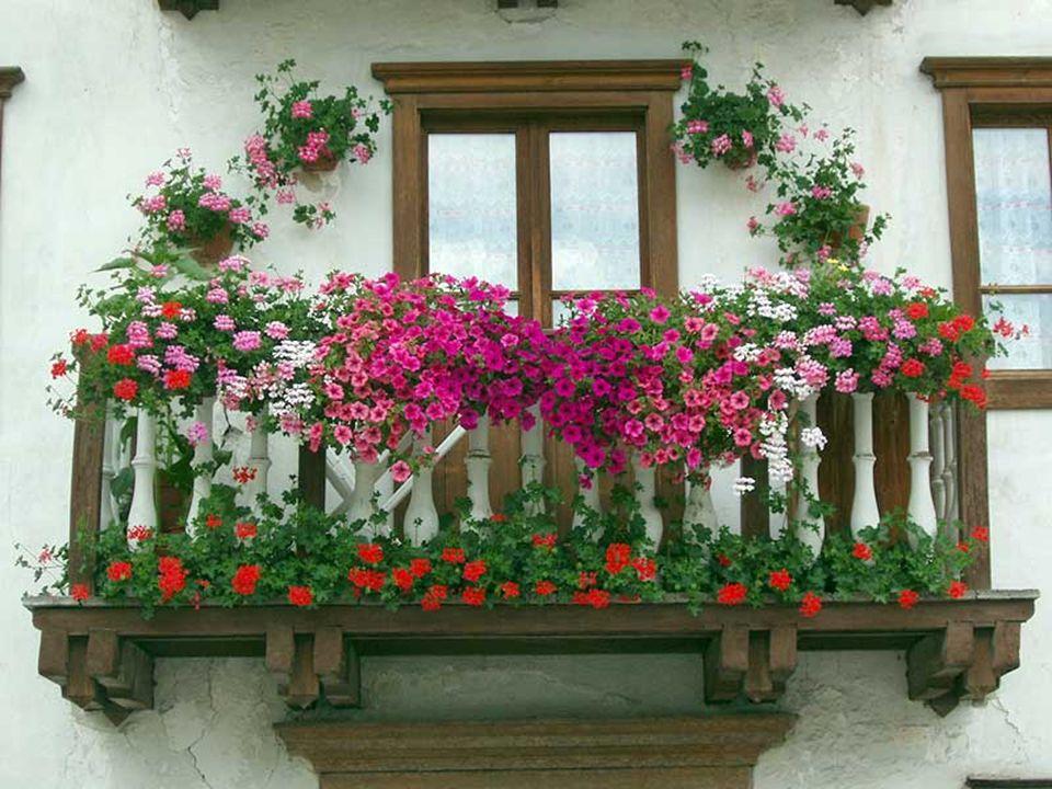 È primavera festa dell`amor!... É primavera festa do amorl!...