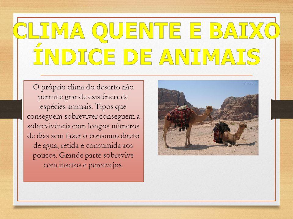 O próprio clima do deserto não permite grande existência de espécies animais.