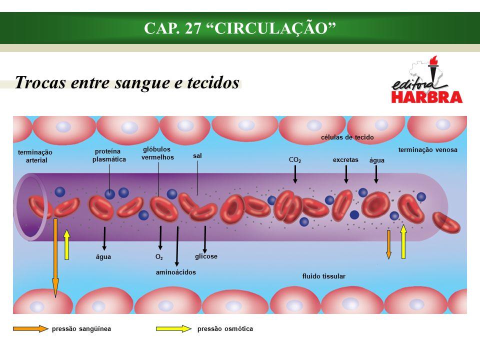 Trocas entre sangue e tecidos CAP.