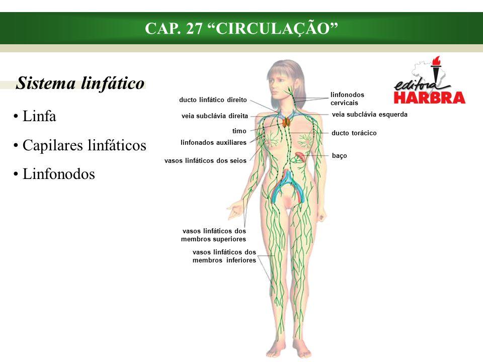 Sistema linfático CAP.