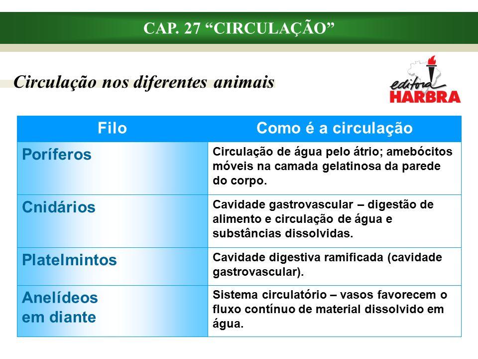 """CAP. 27 """"CIRCULAÇÃO"""" Circulação nos diferentes animais Como é a circulação Sistema circulatório – vasos favorecem o fluxo contínuo de material dissolv"""