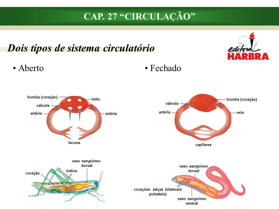 Dois tipos de sistema circulatório CAP.