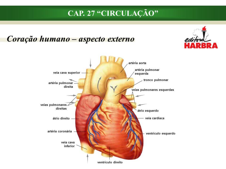 Coração humano – aspecto externo ventrículo esquerdo veias pulmonares esquerdas veia cardíaca artéria pulmonar direita veias pulmonares direitas átrio direito artéria coronária veia cava inferior ventrículo direito átrio esquerdo veia cava superior tronco pulmonar artéria pulmonar esquerda artéria aorta CAP.