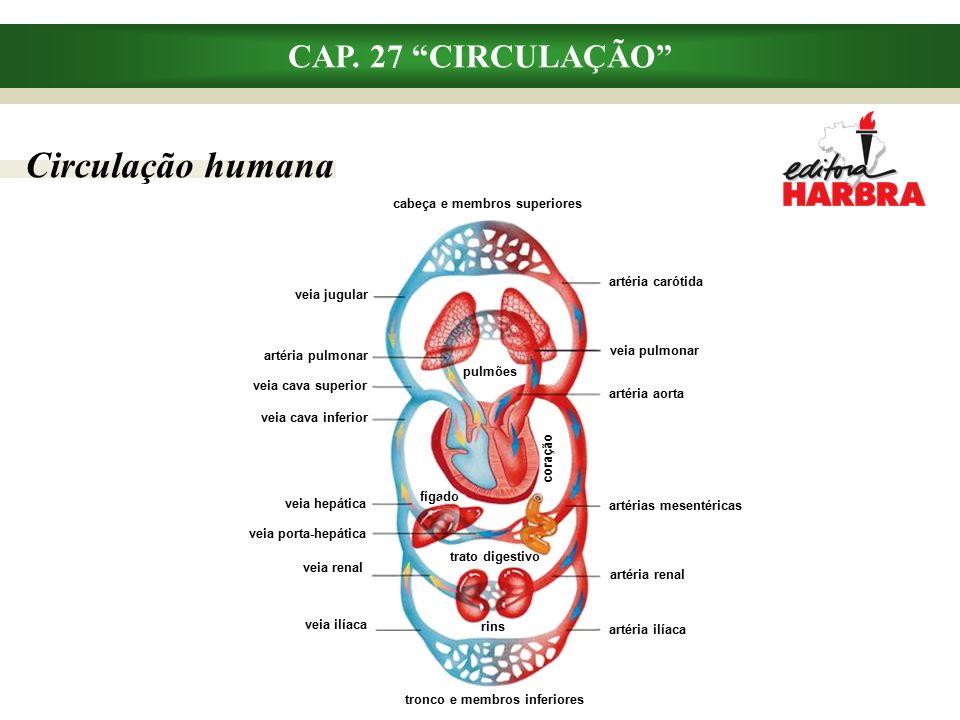 Circulação humana CAP.