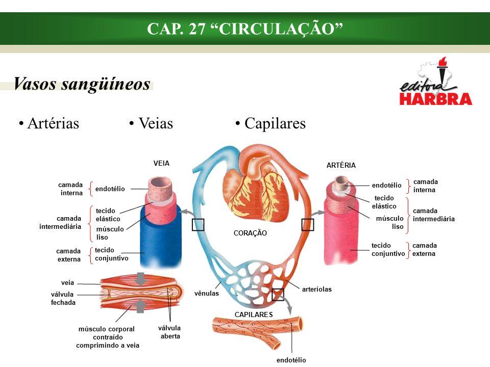 Elementos do sangue e suas funções CAP.