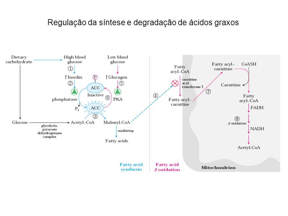 Regulação da síntese e degradação de ácidos graxos