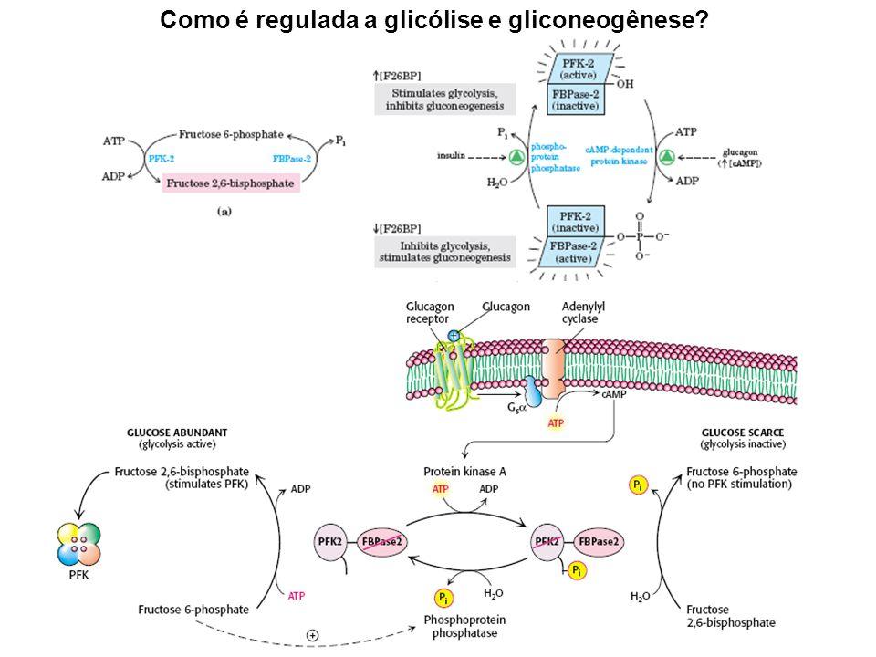 Como é regulada a glicólise e gliconeogênese?