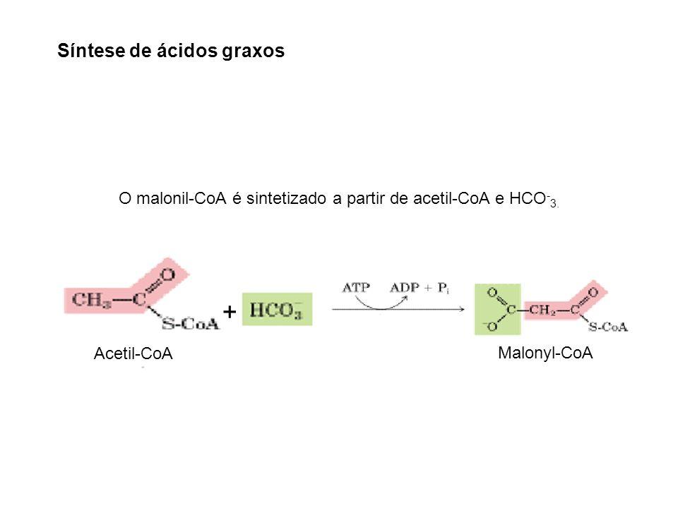 Acetyl-CoA Carboxylase Malonyl-CoA Acetil-CoA + O malonil-CoA é sintetizado a partir de acetil-CoA e HCO - 3. Síntese de ácidos graxos