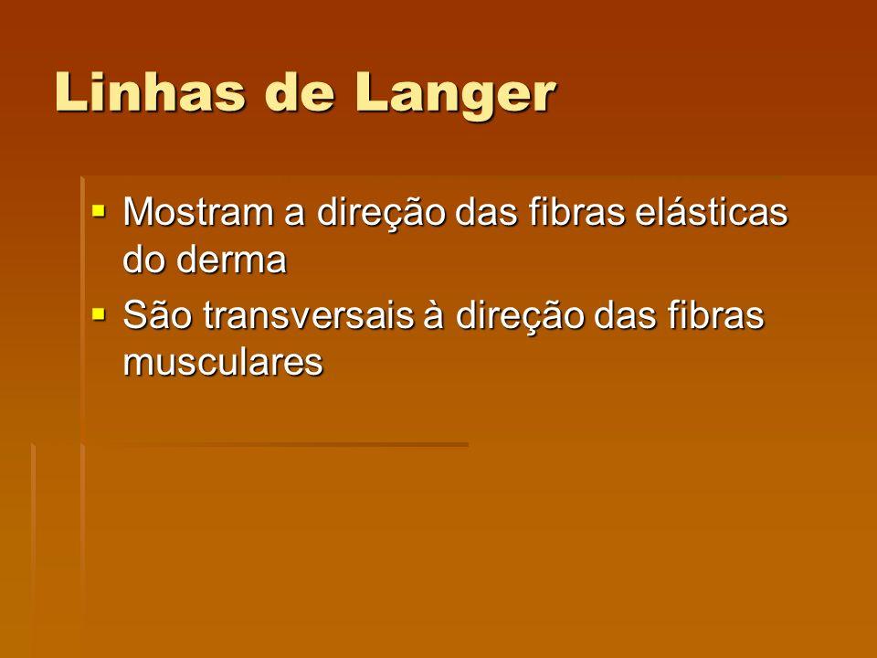 Linhas de Langer  Mostram a direção das fibras elásticas do derma  São transversais à direção das fibras musculares