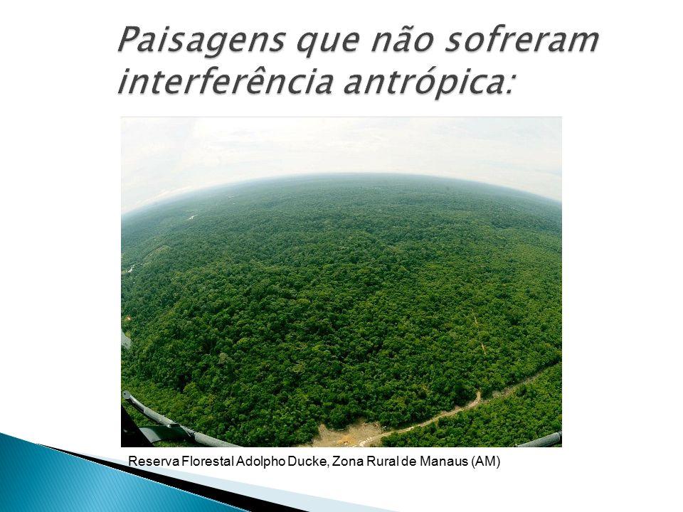 Reserva Florestal Adolpho Ducke, Zona Rural de Manaus (AM)