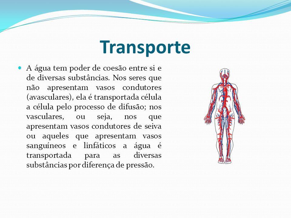 Transporte de seiva ppt presentation