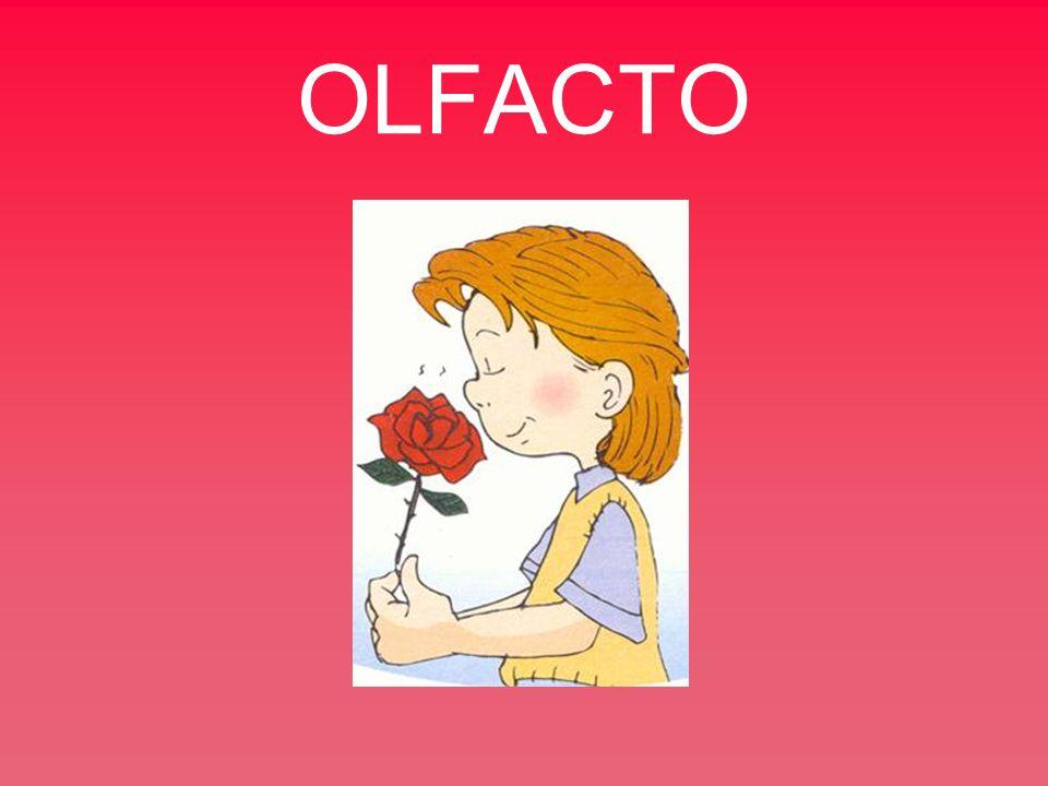 OLFACTO