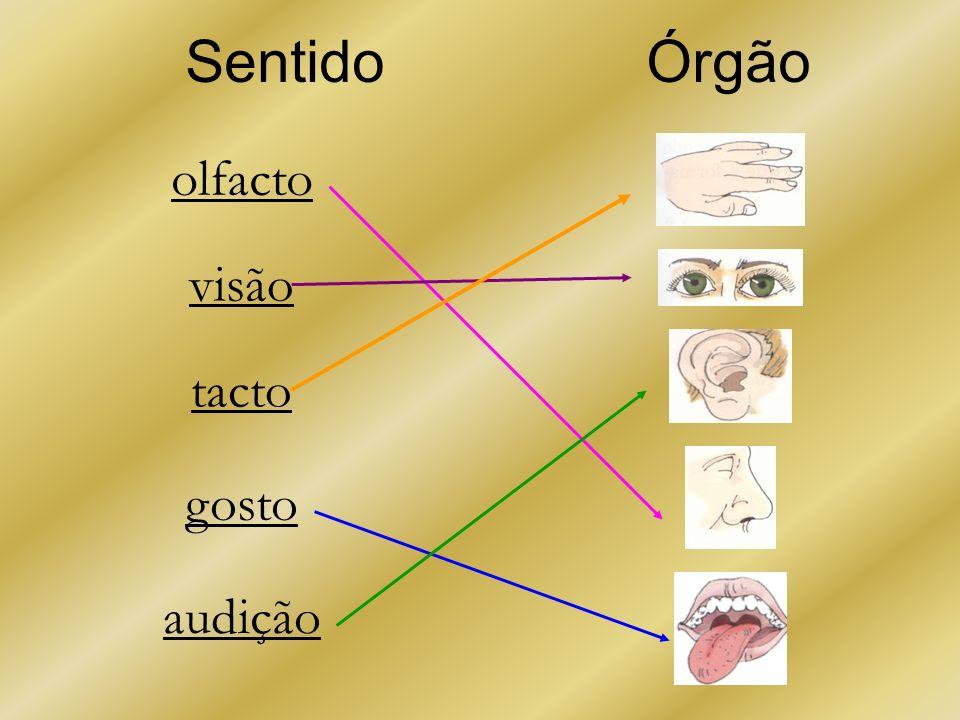 Sentido olfacto visão tacto gosto audição Órgão