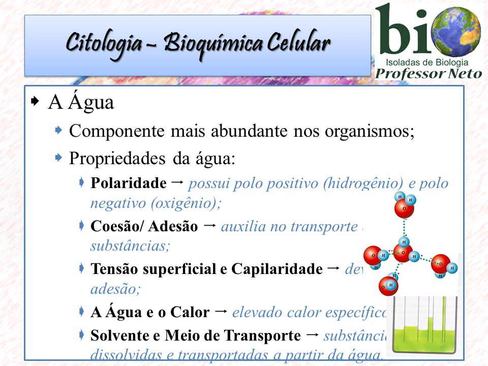  A taxa de água dos seres vivos varia de acordo: EspécieMetabolismo Idade Citologia – Bioquímica Celular
