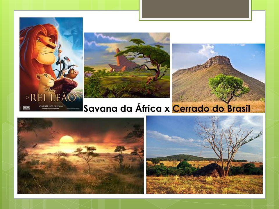 Savana da África x Cerrado do Brasil