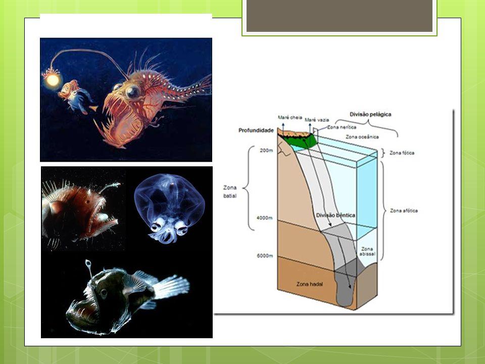 Para casa... Individual  Pesquisa:  Como tem acontecido a degradação dos ambientes marinhos.