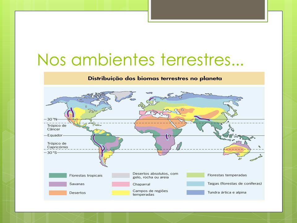  1) Tundra  Onde é encontrada?  Quais suas caraterísticas?  Quais os seres vivos que vivem ali?