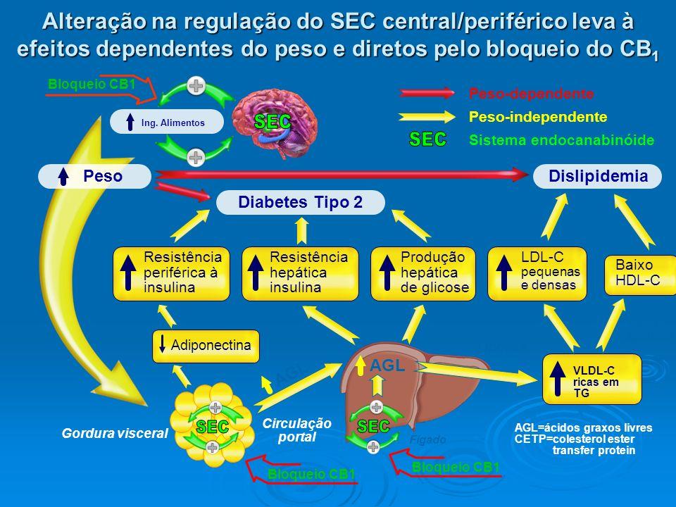 Circulação portal Fígado AGL Gordura visceral AGL=ácidos graxos livres CETP=colesterol ester transfer protein Resistência periférica à insulina Adipon