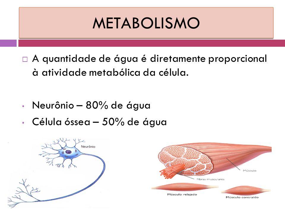 METABOLISMO  A quantidade de água é diretamente proporcional à atividade metabólica da célula.