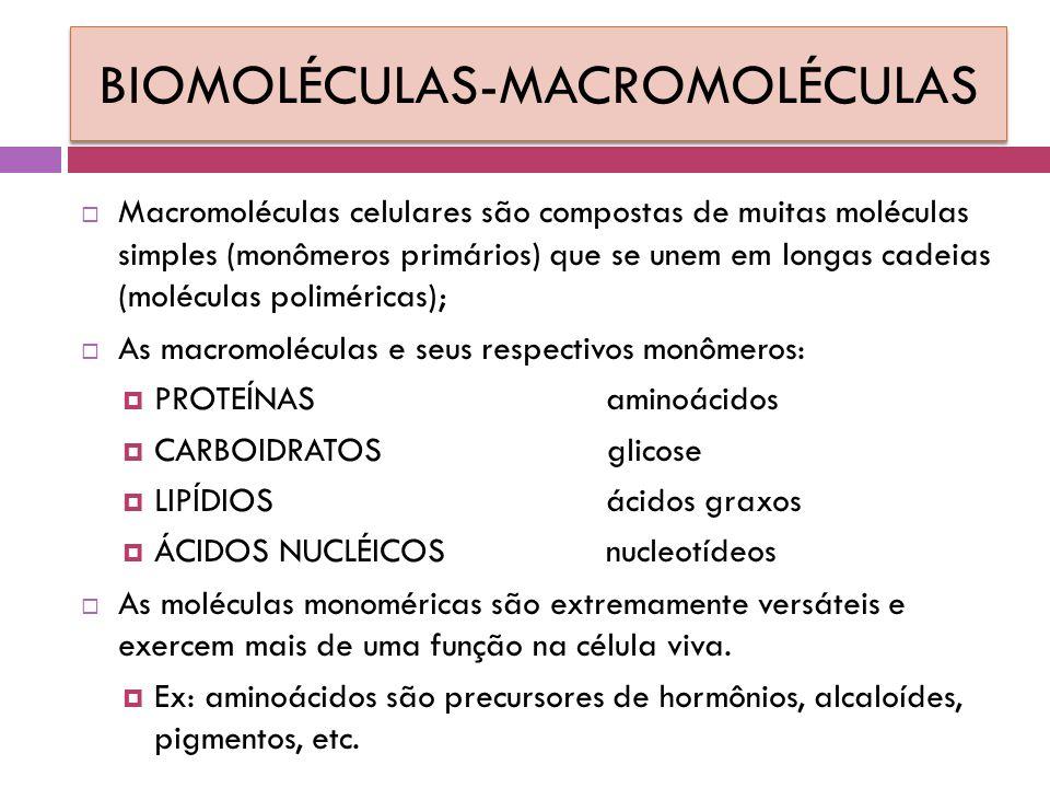 BIOMOLÉCULAS-MACROMOLÉCULAS  Macromoléculas celulares são compostas de muitas moléculas simples (monômeros primários) que se unem em longas cadeias (moléculas poliméricas);  As macromoléculas e seus respectivos monômeros:  PROTEÍNAS aminoácidos  CARBOIDRATOS glicose  LIPÍDIOSácidos graxos  ÁCIDOS NUCLÉICOSnucleotídeos  As moléculas monoméricas são extremamente versáteis e exercem mais de uma função na célula viva.