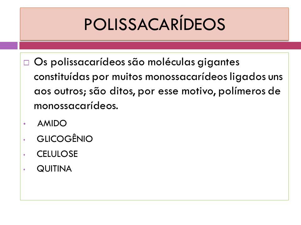 POLISSACARÍDEOS  Os polissacarídeos são moléculas gigantes constituídas por muitos monossacarídeos ligados uns aos outros; são ditos, por esse motivo, polímeros de monossacarídeos.