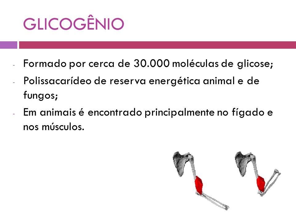 GLICOGÊNIO - Formado por cerca de 30.000 moléculas de glicose; - Polissacarídeo de reserva energética animal e de fungos; - Em animais é encontrado principalmente no fígado e nos músculos.
