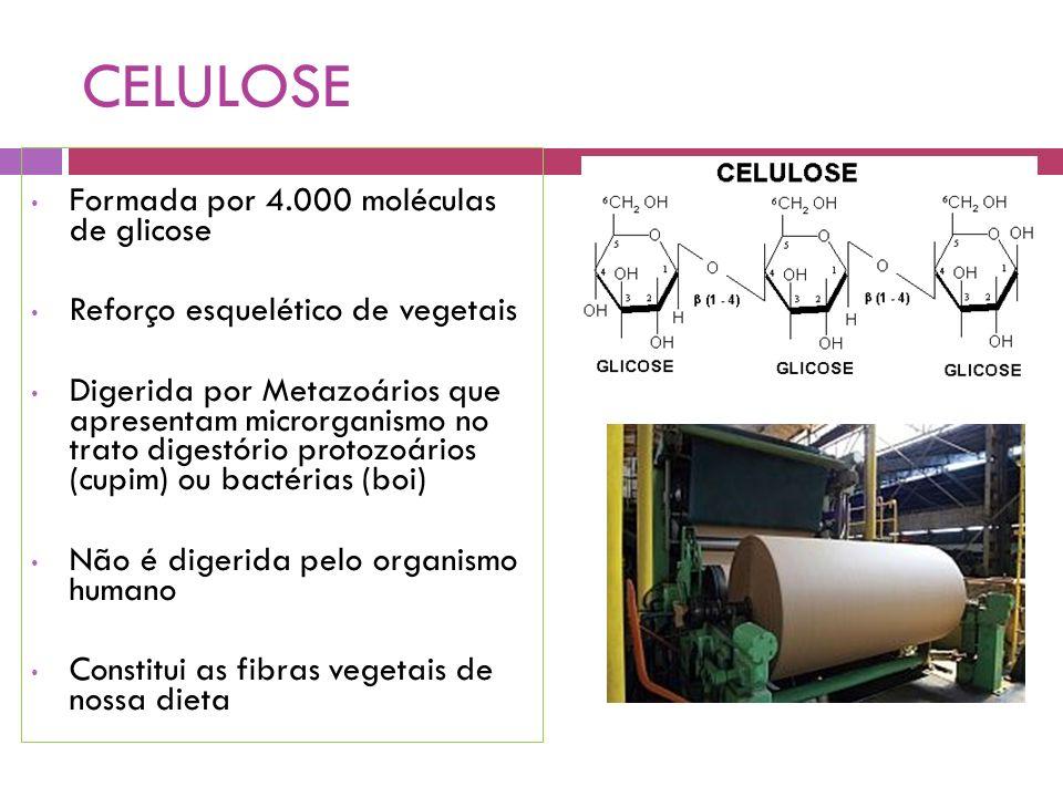 CELULOSE Formada por 4.000 moléculas de glicose Reforço esquelético de vegetais Digerida por Metazoários que apresentam microrganismo no trato digestório protozoários (cupim) ou bactérias (boi) Não é digerida pelo organismo humano Constitui as fibras vegetais de nossa dieta