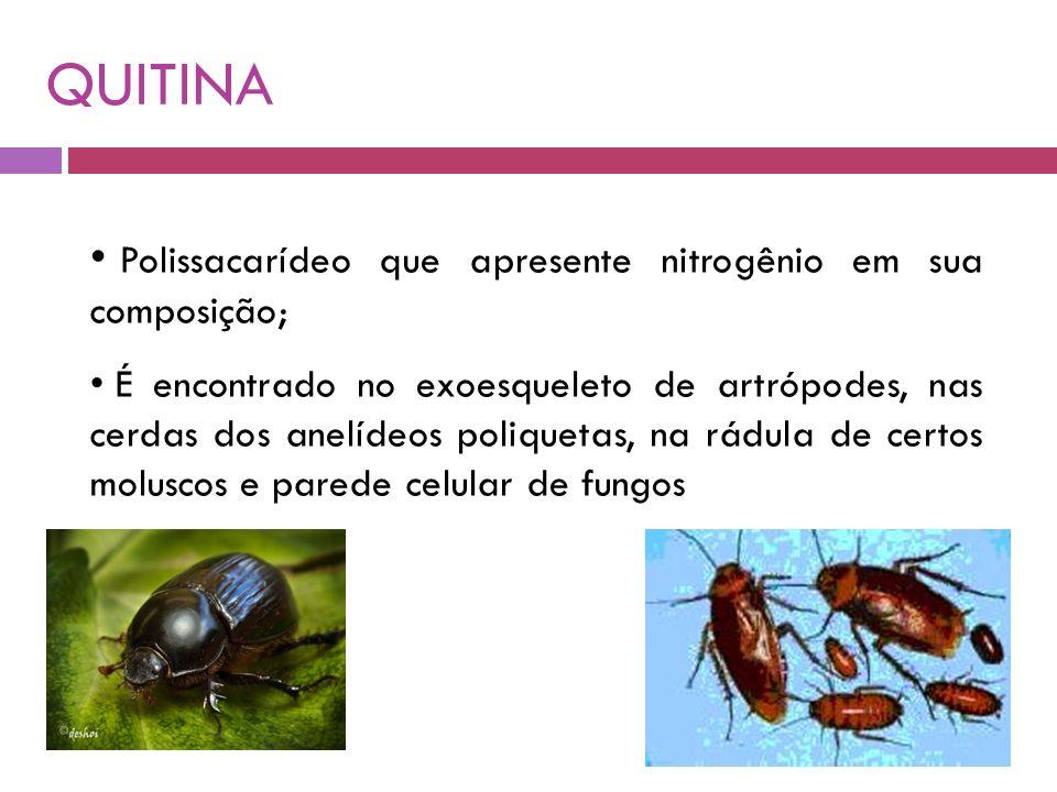QUITINA Polissacarídeo que apresente nitrogênio em sua composição; É encontrado no exoesqueleto de artrópodes, nas cerdas dos anelídeos poliquetas, na rádula de certos moluscos e parede celular de fungos