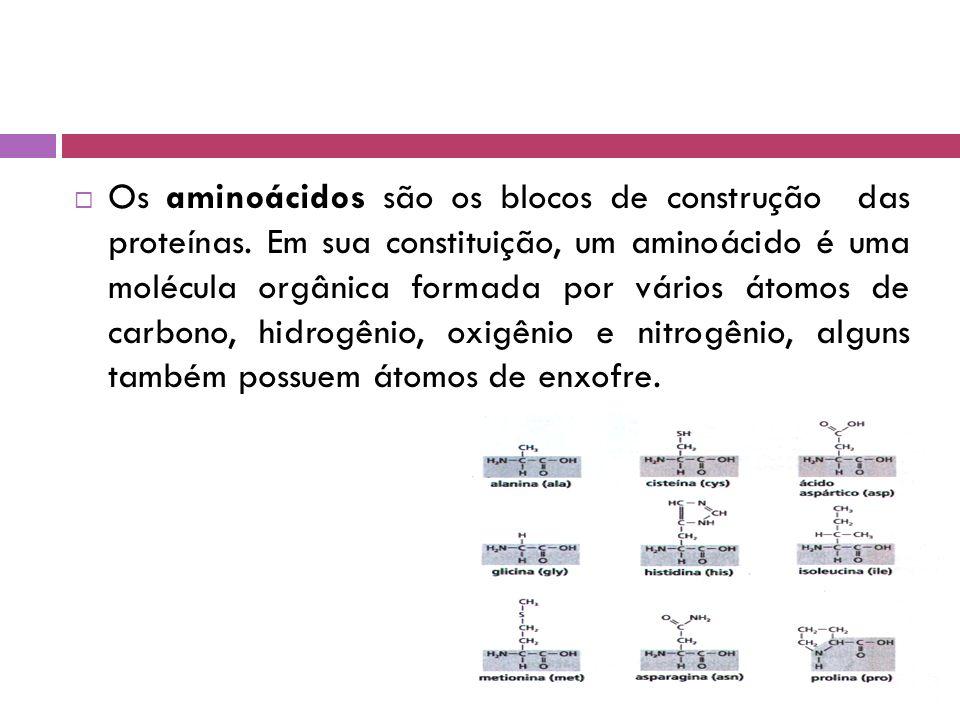  Os aminoácidos são os blocos de construção das proteínas.