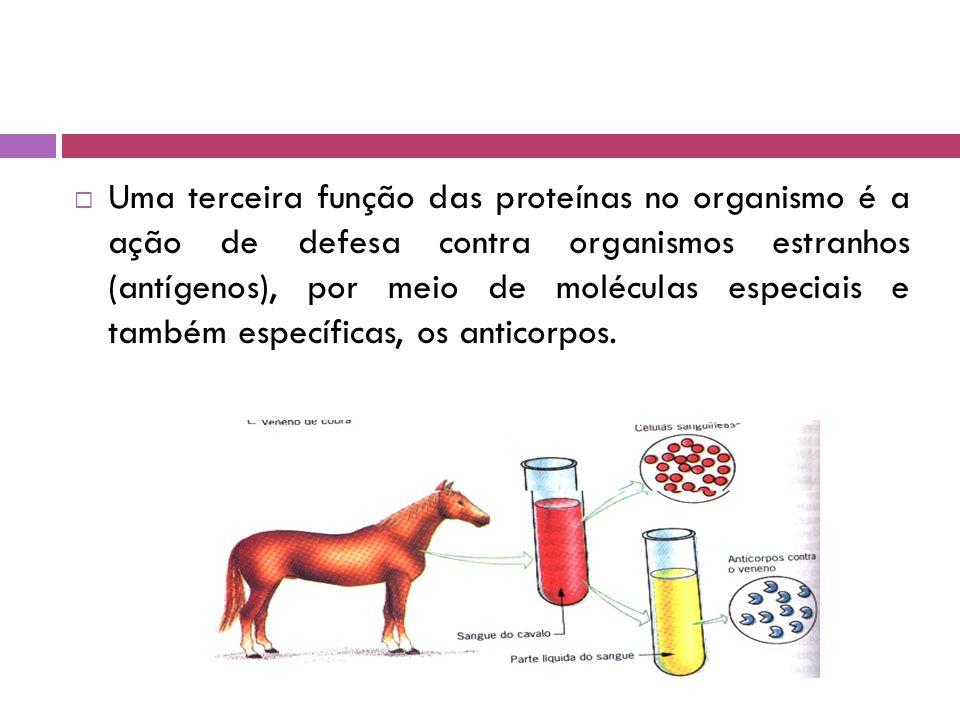 Uma terceira função das proteínas no organismo é a ação de defesa contra organismos estranhos (antígenos), por meio de moléculas especiais e também específicas, os anticorpos.