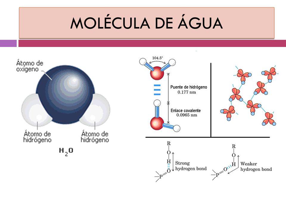 ÁGUA  substância em maior quantidade presentes em uma célula, conseqüentemente, no ser vivo.