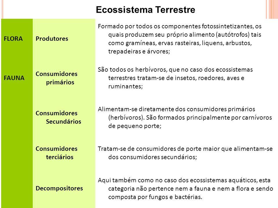 FLORAProdutores Formado por todos os componentes fotossintetizantes, os quais produzem seu próprio alimento (autótrofos) tais como gramíneas, ervas rasteiras, liquens, arbustos, trepadeiras e árvores; FAUNA Consumidores primários São todos os herbívoros, que no caso dos ecossistemas terrestres tratam-se de insetos, roedores, aves e ruminantes; Consumidores Secundários Alimentam-se diretamente dos consumidores primários (herbívoros).