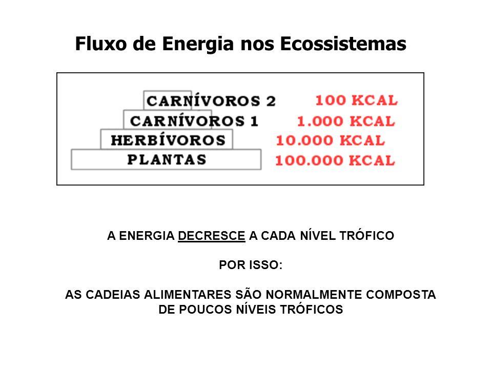 Fluxo de Energia nos Ecossistemas A ENERGIA DECRESCE A CADA NÍVEL TRÓFICO POR ISSO: AS CADEIAS ALIMENTARES SÃO NORMALMENTE COMPOSTA DE POUCOS NÍVEIS TRÓFICOS