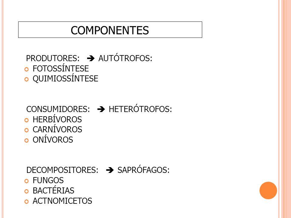 PRODUTORES:  AUTÓTROFOS: FOTOSSÍNTESE QUIMIOSSÍNTESE CONSUMIDORES:  HETERÓTROFOS: HERBÍVOROS CARNÍVOROS ONÍVOROS DECOMPOSITORES:  SAPRÓFAGOS: FUNGOS BACTÉRIAS ACTNOMICETOS COMPONENTES