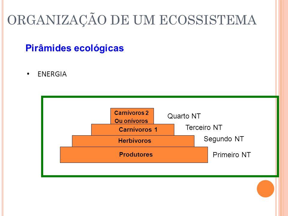 Pirâmides ecológicas ENERGIA Primeiro NT Segundo NT Terceiro NT Quarto NT Produtores Herbívoros Carnívoros 1 Carnívoros 2 Ou onívoros