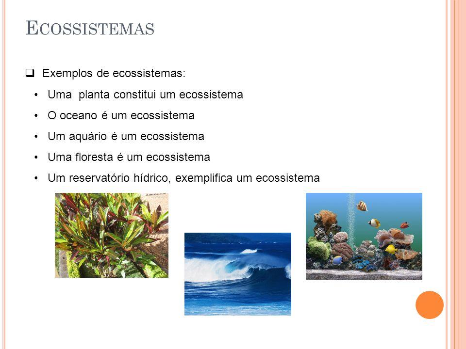 E COSSISTEMAS  Exemplos de ecossistemas: Uma planta constitui um ecossistema O oceano é um ecossistema Um aquário é um ecossistema Uma floresta é um ecossistema Um reservatório hídrico, exemplifica um ecossistema