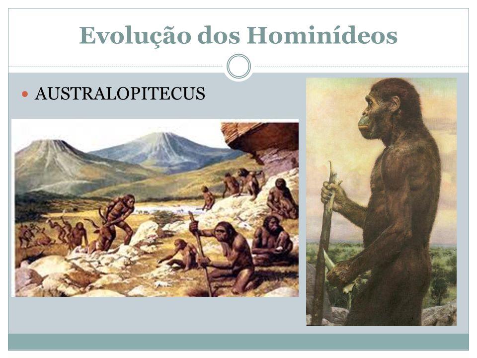 Evolução dos Hominídeos AUSTRALOPITECUS