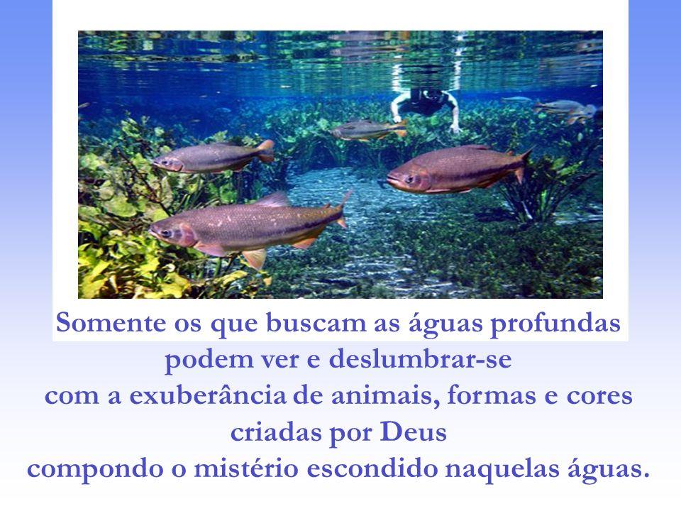 """Podemos pensar: """"quanto mistério contido nessas águas tão profundas..."""" E ficamos ali, vendo só a superfície. Apenas imaginando a imensa e bela riquez"""