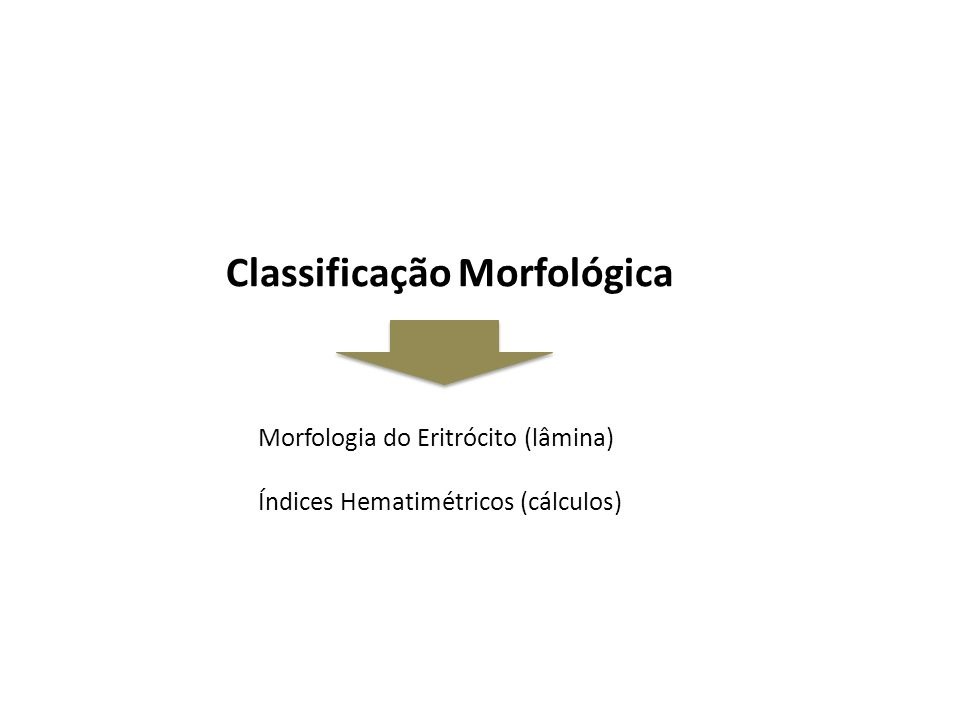 Morfologia do Eritrócito (lâmina) Índices Hematimétricos (cálculos)