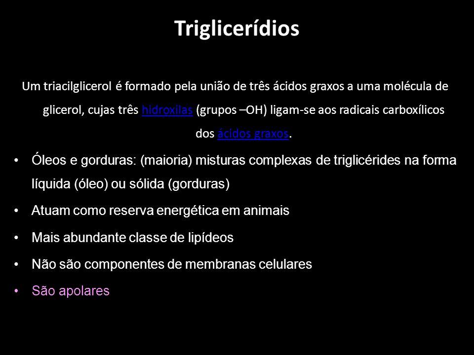 Triglicerídios Um triacilglicerol é formado pela união de três ácidos graxos a uma molécula de glicerol, cujas três hidroxilas (grupos –OH) ligam-se aos radicais carboxílicos dos ácidos graxos.hidroxilasácidos graxos Óleos e gorduras: (maioria) misturas complexas de triglicérides na forma líquida (óleo) ou sólida (gorduras) Atuam como reserva energética em animais Mais abundante classe de lipídeos Não são componentes de membranas celulares São apolares