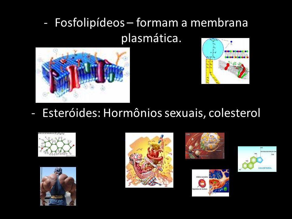 -Fosfolipídeos – formam a membrana plasmática. -Esteróides: Hormônios sexuais, colesterol