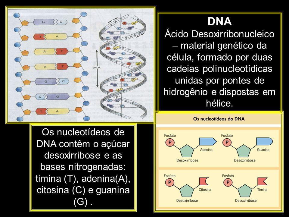 DNA Ácido Desoxirribonucleico – material genético da célula, formado por duas cadeias polinucleotídicas unidas por pontes de hidrogênio e dispostas em hélice.