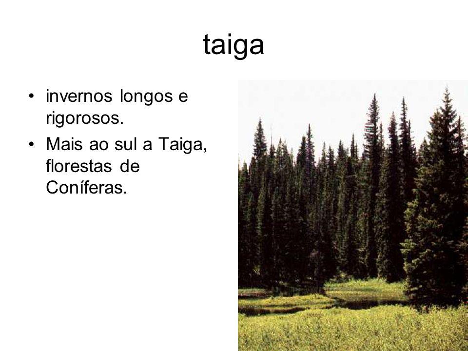 taiga invernos longos e rigorosos. Mais ao sul a Taiga, florestas de Coníferas.