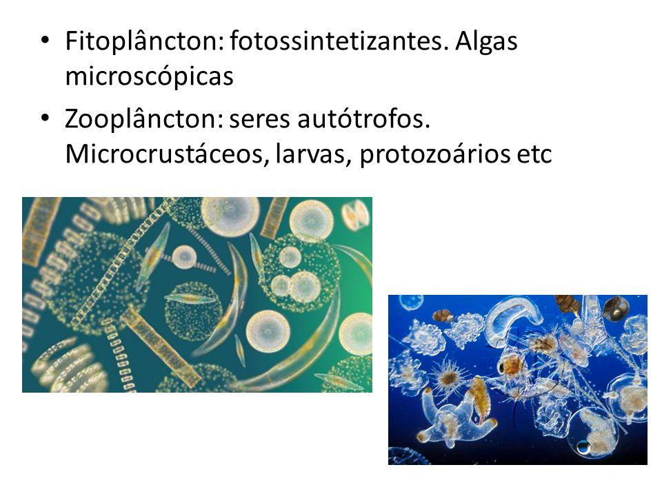 Fitoplâncton: fotossintetizantes. Algas microscópicas Zooplâncton: seres autótrofos. Microcrustáceos, larvas, protozoários etc