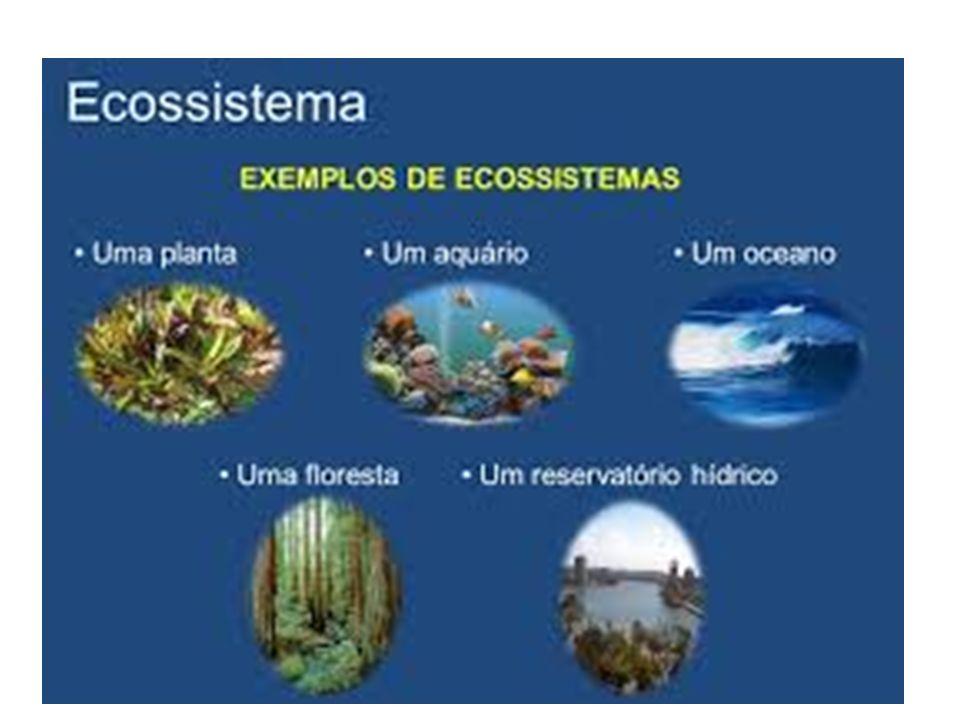 Definições: Biodiversidade: Riqueza biológica de um país Biomas: Conjunto de ecossistemas relacionados.