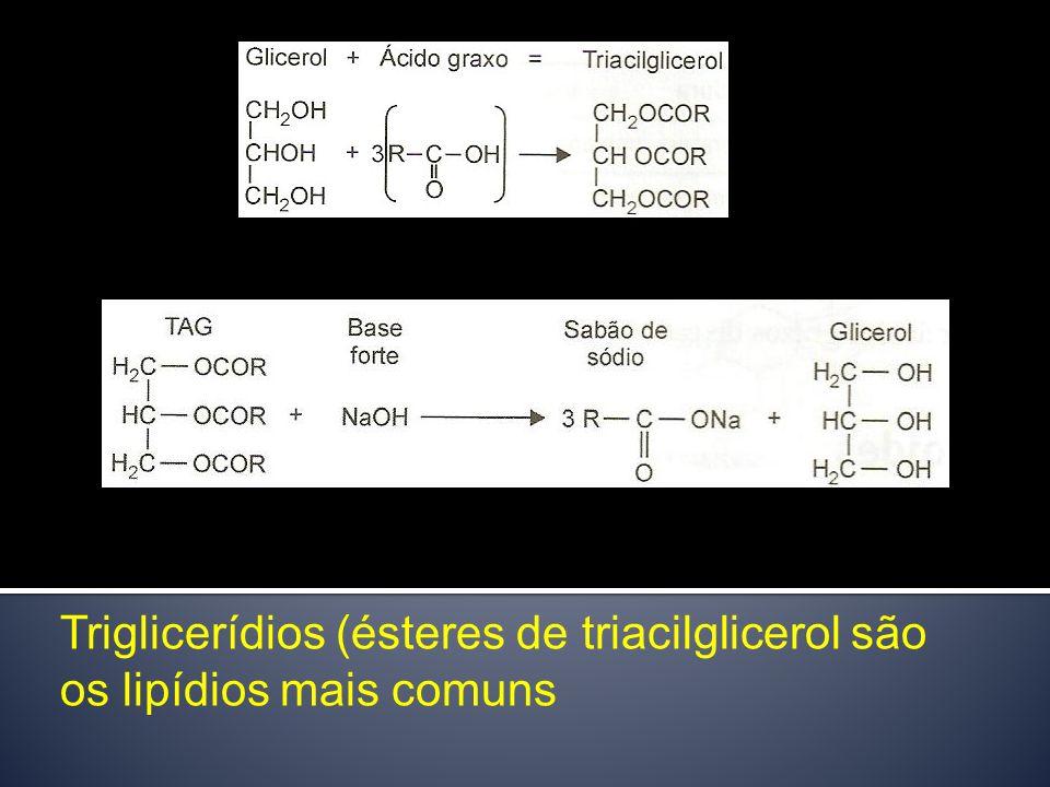 Triglicerídios (ésteres de triacilglicerol são os lipídios mais comuns