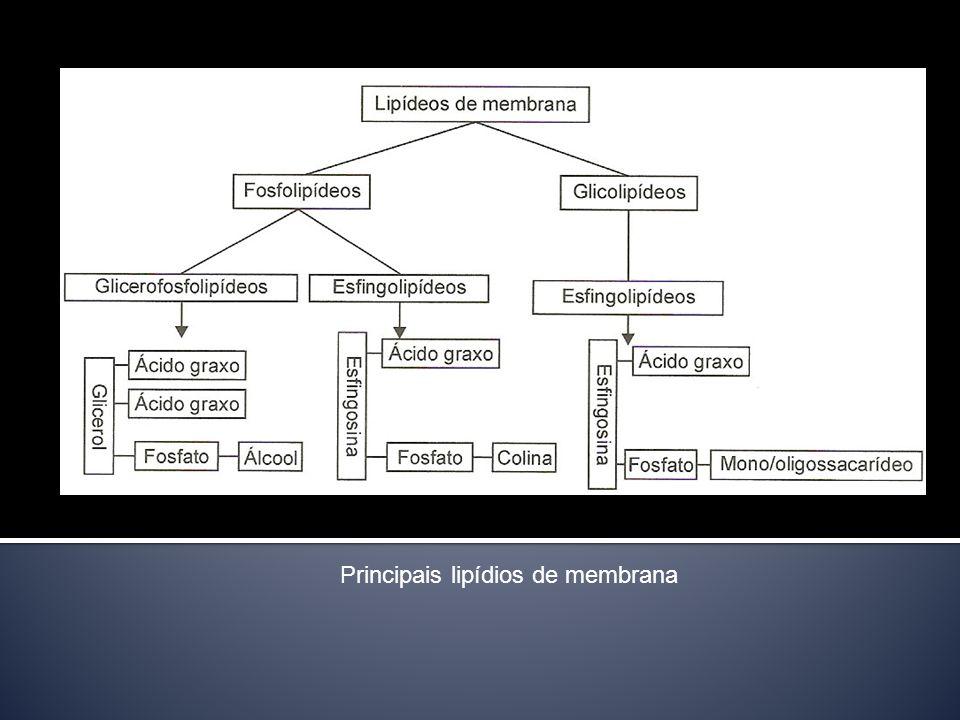 Principais lipídios de membrana
